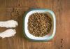 Jak wybrać suchą karmę dla psa