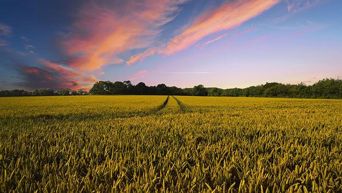 Co zagraża uprawom rolnym
